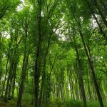 Magura Codlei - Peisaje de primavara