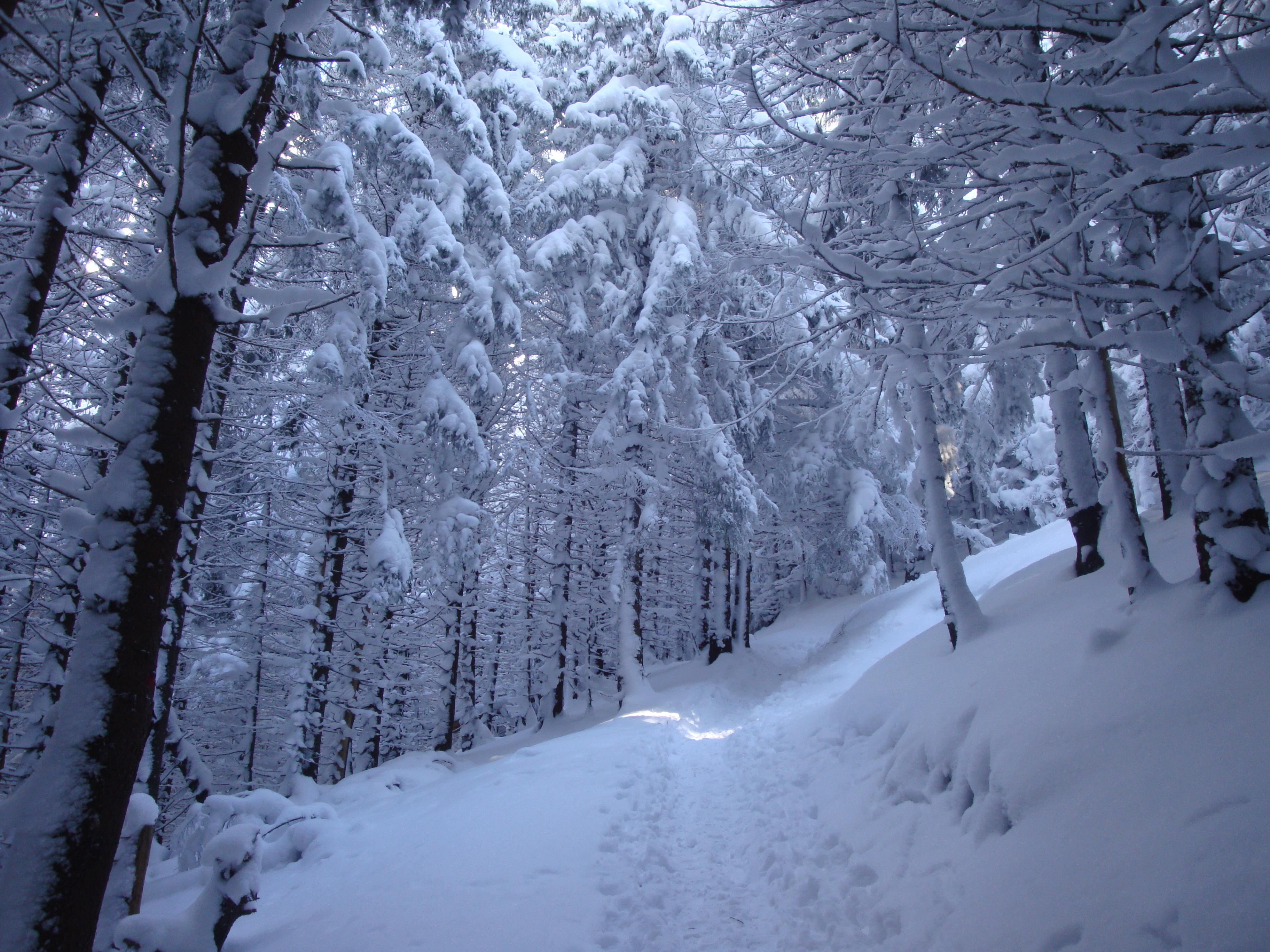 Trasee de iarna din Masivul Piatra Mare